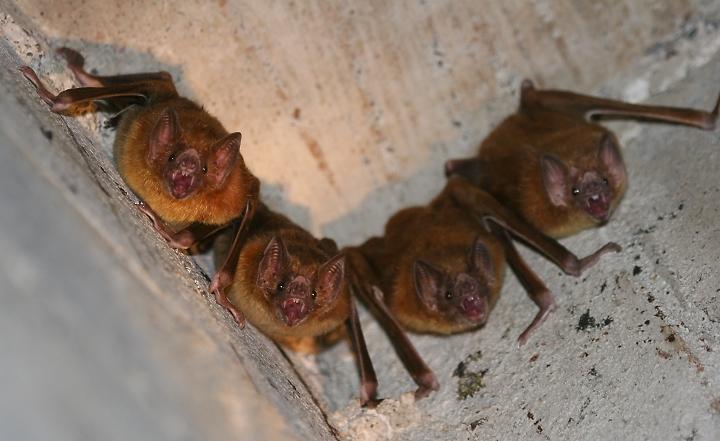 vampire bats sleeping. vampire bats sleeping. vampire bats Articles,; vampire bats Articles,. brucem91. May 10, 03:59 PM