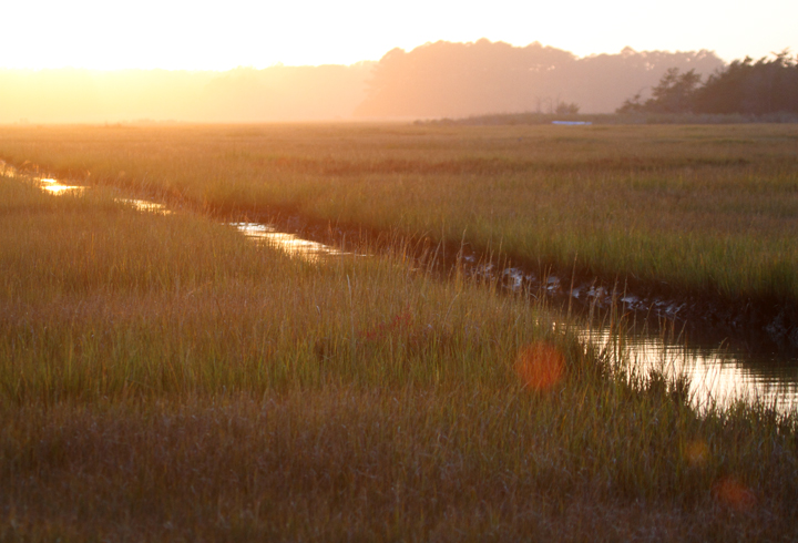 The sun sets over the salt marsh at Georges Island Landing, Maryland (10/26/2010). Photo by Bill Hubick.